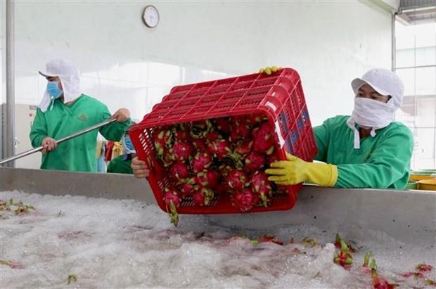 Oportunidades y desafíos de la agricultura vietnamita con el EVFTA - ảnh 1