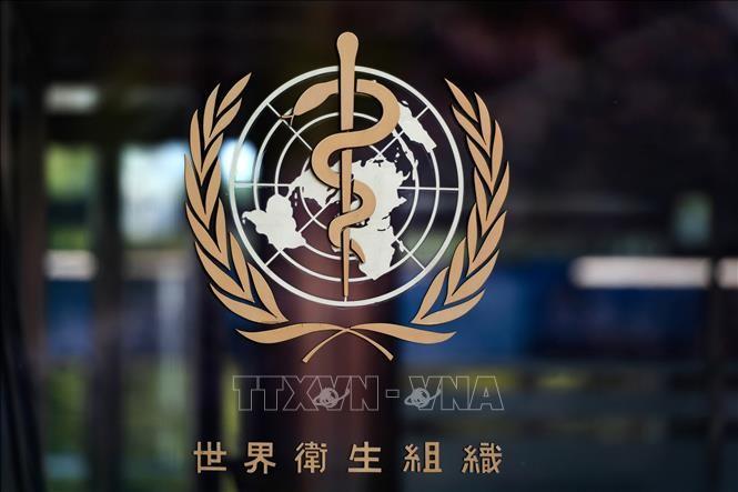 中国谴责美国终止与世卫组织关系 - ảnh 1