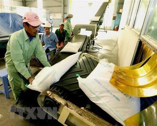 按照《越英自贸协定》出口英国的越南首批60吨大米正式上市 - ảnh 1