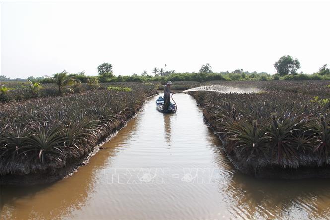 La salinisation dans le delta du Mékong diminue - ảnh 1