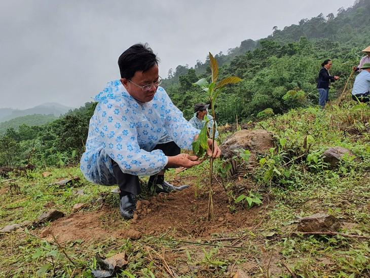 Restauration des forêts en amont du fleuve Gianh - ảnh 3