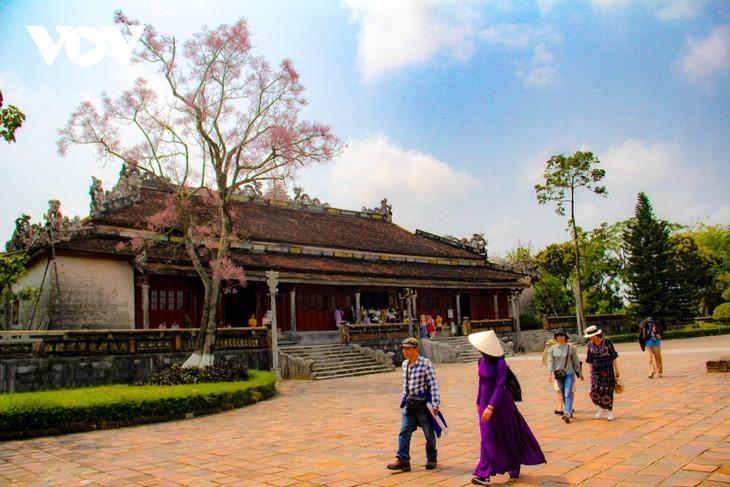 Des Parasols chinois en fleur dans la cité impériale de Huê - ảnh 2
