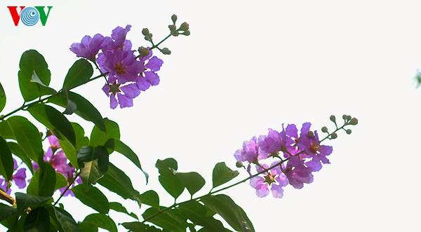 Bunte Sommerblüten - ảnh 12