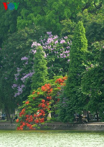 Bunte Sommerblüten - ảnh 7