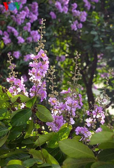 Bunte Sommerblüten - ảnh 8
