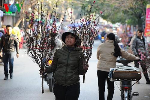 Hanoi erwartet das Jahr des Pferdes - ảnh 1