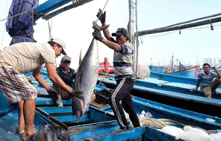 Schutz des Vorkommens der Fischerei für einen blauen Ozean - ảnh 1