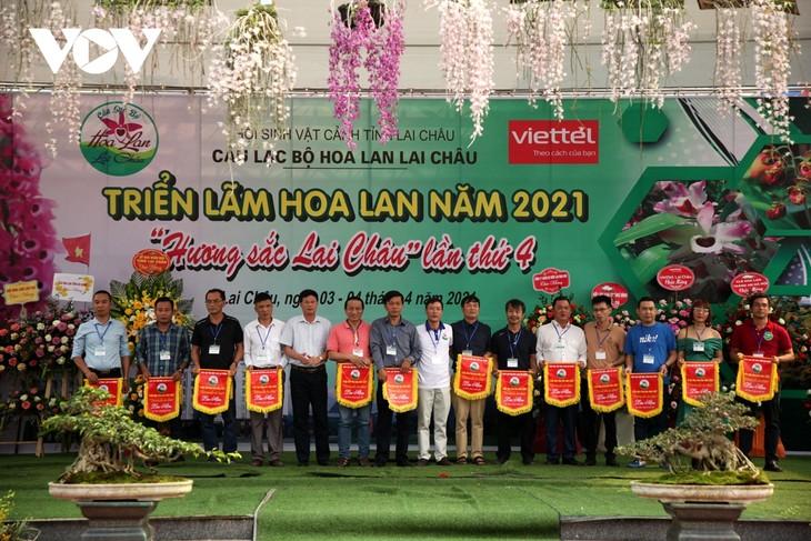Mehr als 1000 Orchideen-Töpfer werden in der Ausstellung in Lai Chau präsentiert - ảnh 1