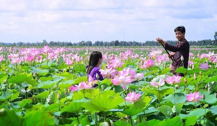 Du lotus à la réalité…    - ảnh 5