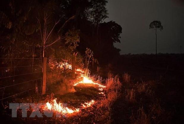 Menemukan lebih dari 2.500 titik panas kebakaran hutan di Asia Tenggara  - ảnh 1