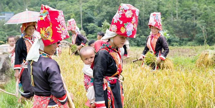 Menyelipkan gender dalam Program target perkembangan daerah etnis minoritas - ảnh 1