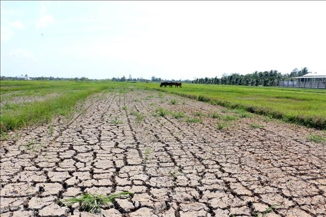 Memberikan bantuan keuangan sebesar 530 miliar VND kepada 8 provinsi Daerah Dataran Rendah Sungai Mekong untuk mencegah dan menanggulangi kekeringan dan salinisasi - ảnh 1
