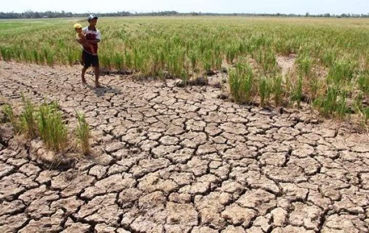 UNDP memberikan bantuan sebesar 185.000 USD kepada provinsi-provinsi yang terkena dampak  kekeringan dan keasinan - ảnh 1