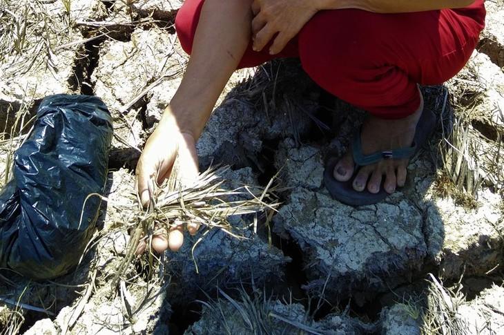 Kekeringan merusakkan Ujung Ca Mau - ảnh 6