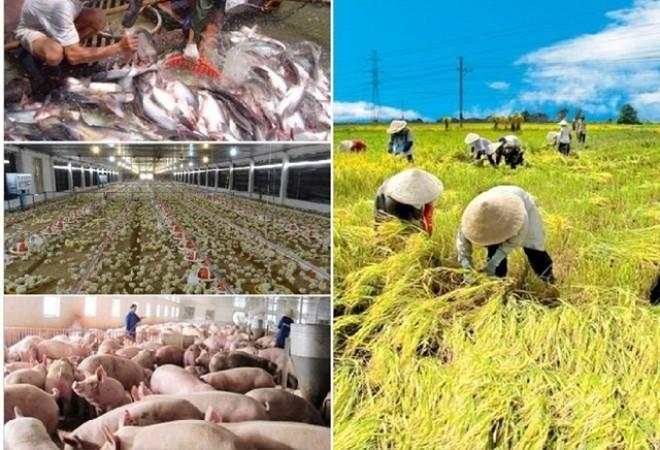 Mendorong produksi pertanian untuk menjamin kebutuhan di dalam negeri dan ekspor pada waktu merebaknya wabah Covid-19 - ảnh 2