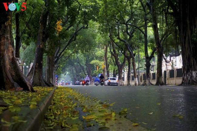 Pemandangan Kota Hanoi yang tenteram sentosa pada pembatasan sosial - ảnh 2