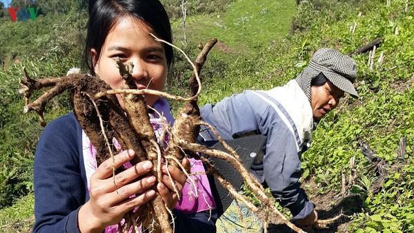 Kabupaten-Kabupaten Daerah Pegunungan di Provinsi Quang Nam Mengembangkan Program: 'Setiap kecamatan Satu Produk - ảnh 2