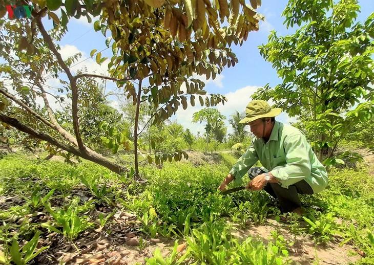 Daya hidup baru di Hutan U Minh Ha - ảnh 1
