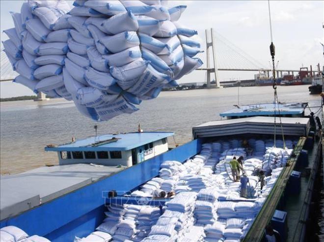 Harga beras ekspor Vietnam menggeliat dan menjadi pelopor di dunia - ảnh 1
