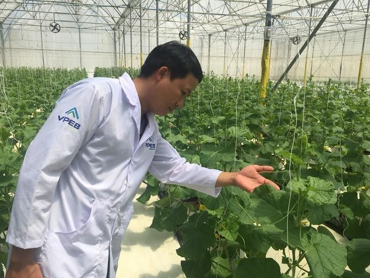 Hasil pertanian di Provinsi Binh Thuan mengusahakan jalan untuk masuk ke pasar besar - ảnh 2
