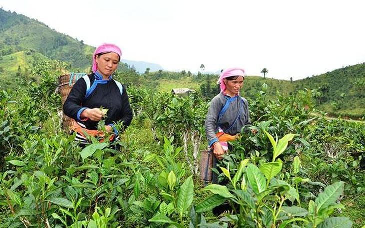 Program Setiap Kecamatan Satu Produk (OCOP) di Provinsi Lao Cai - ảnh 1