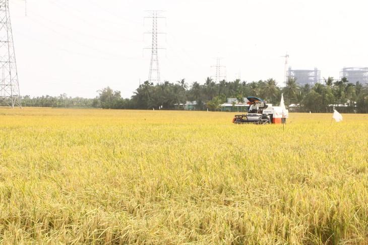 Provinsi Soc Trang Hadapi Situasi Keasinan Tanah untuk Lindungi Masa Tanam Padi Musim Dingin-Musim Semi - ảnh 2