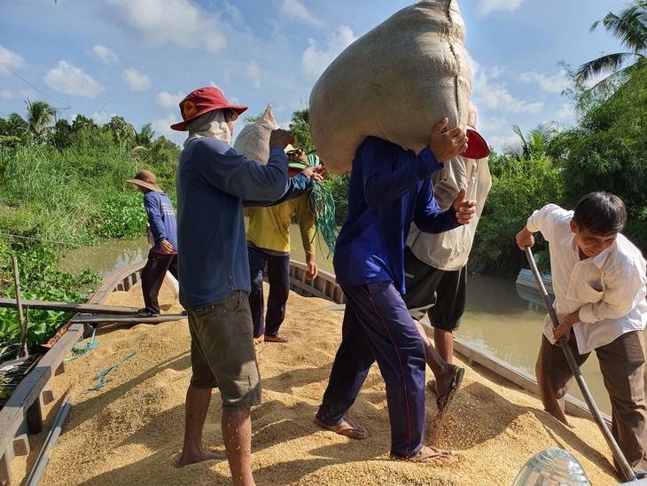 Masa Tanam Padi Musim Dingin-Musim Semi di Daerah Dataran Rendah Sungai Mekong Mencapai Keuntungan Besar - ảnh 2