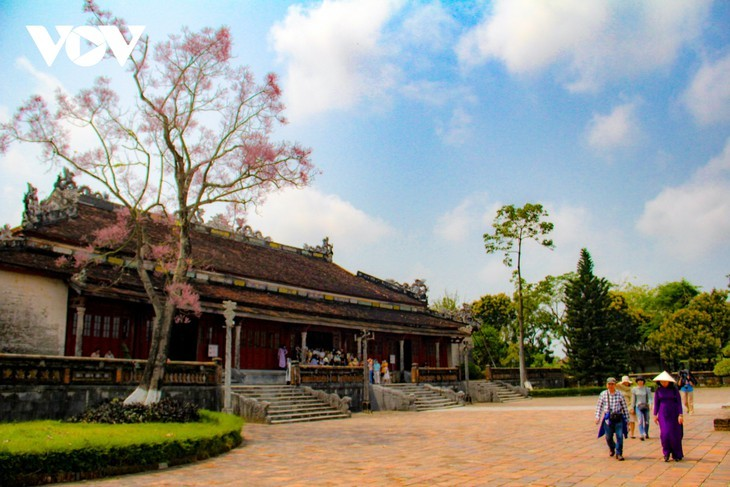 """Asyik Pandangi """"Bunga Pohon Parasol"""" (Ngo Dong)  Bermekaran di Benteng Hue  - ảnh 8"""