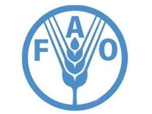 FAO-Konferenz: verstärkte Nahrungsmittelsicherheit und Armutsbekämpfung - ảnh 1