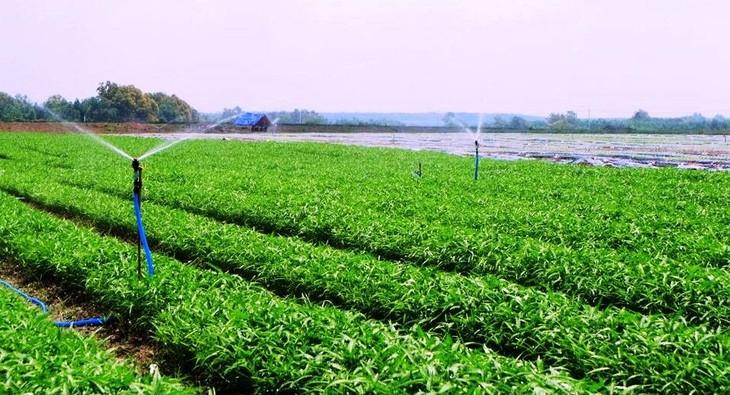 Unterstützung der Hanoier Bauern beim Verbrauch von Agrarprodukten in Epidemie-Zeiten - ảnh 1