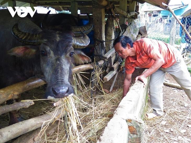 Volksgruppe Hre erzählt Geschichte über Armutsminderung dank Wasserbüffel - ảnh 1