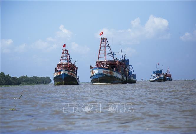 EC tagt online zur Aufhebung der gelben IUU-Karte gegen Vietnam - ảnh 1