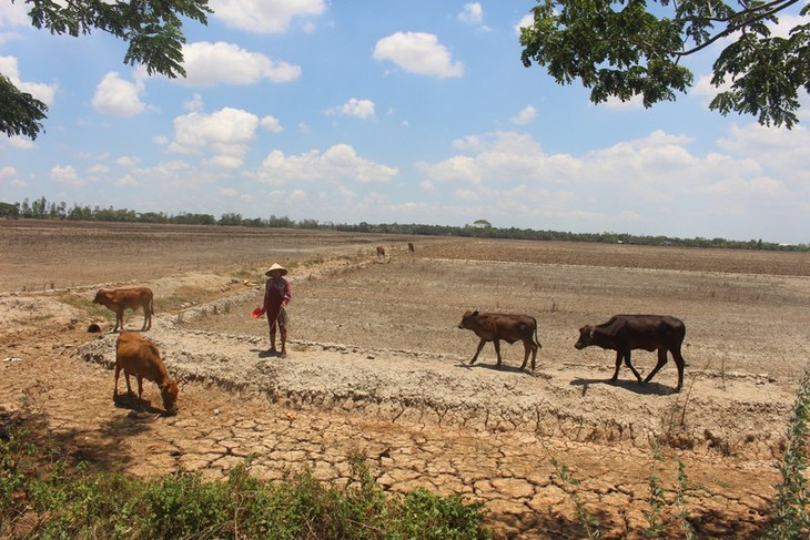 EU, 베트남의 가뭄 및 염수 피해자 지원 - ảnh 1