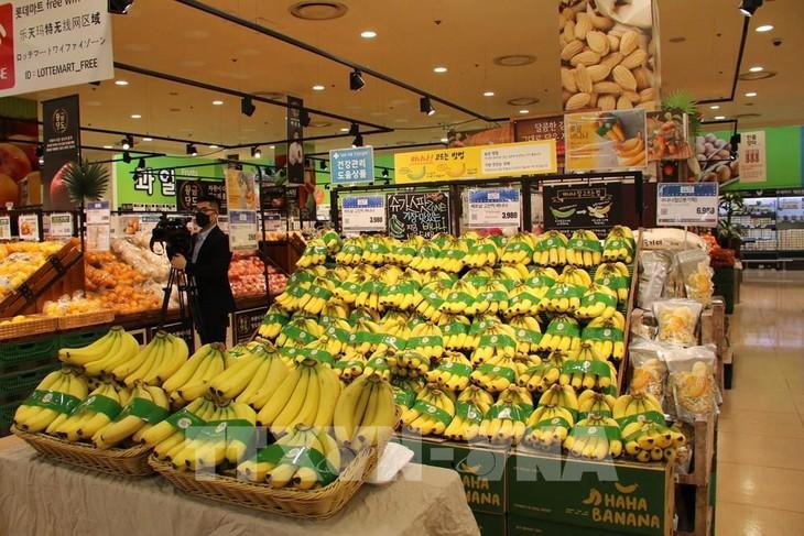 베트남의 바나나, 한국  롯데 마트에 본격 판매 - ảnh 1