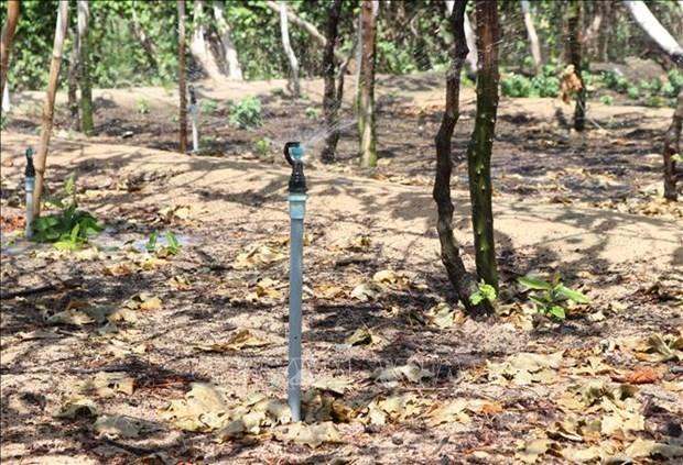 베트남 쌀, 최신 물방울 급수 기술 적용으로 물 절약 가능 - ảnh 1