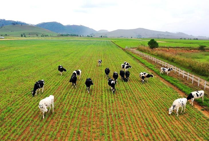 베트남, 지속가능한 목축업 개발과 기후변화 적응 지향 - ảnh 1