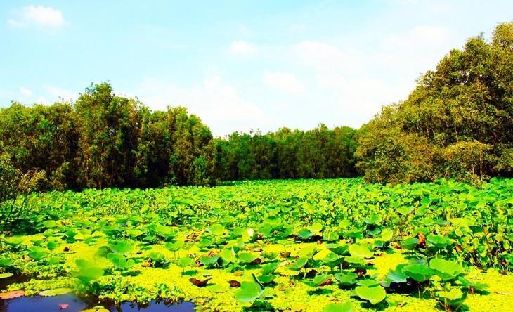 안장성 짜스 티트리 숲의 아름다움 - ảnh 4
