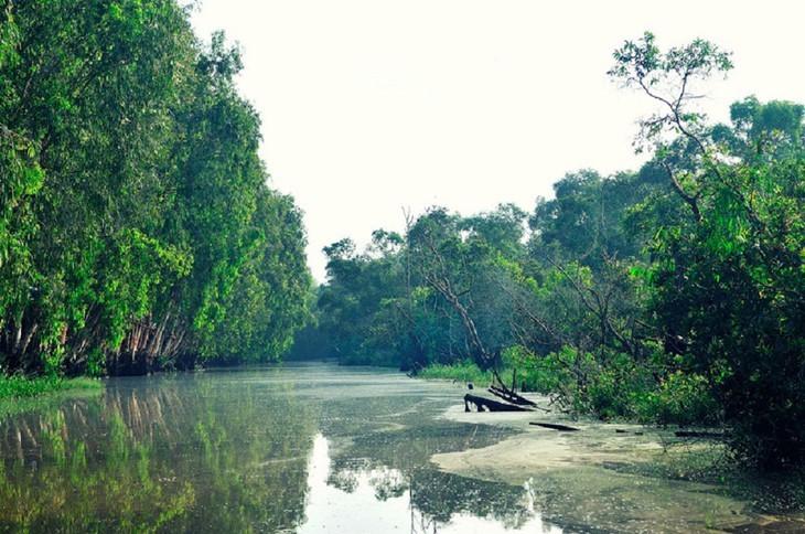 안장성 짜스 티트리 숲의 아름다움 - ảnh 1