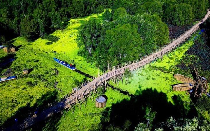 안장성 짜스 티트리 숲의 아름다움 - ảnh 12