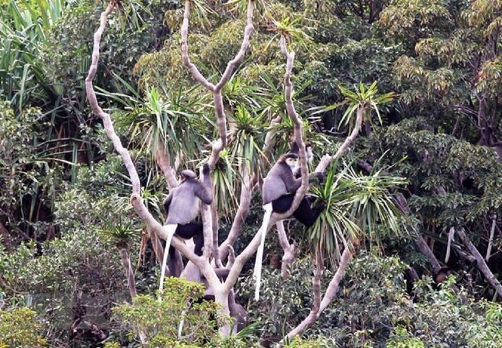 베트남, 세계생물권보전지역 두 곳 추가 등재 - ảnh 8