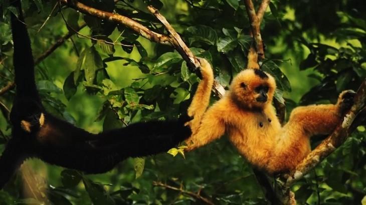 베트남, 세계생물권보전지역 두 곳 추가 등재 - ảnh 14