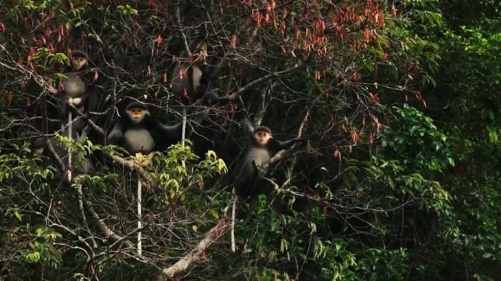베트남, 세계생물권보전지역 두 곳 추가 등재 - ảnh 15