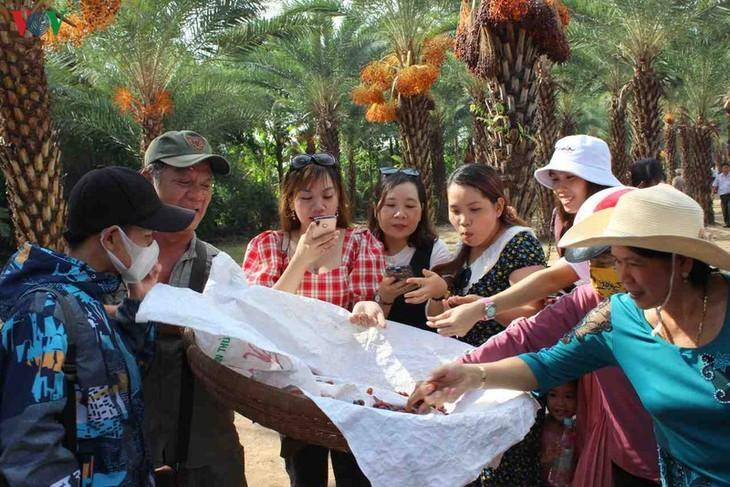 Memandangi keindahan kebun kurma paling besar di Daerah Dataran Rendah Sungai Mekong - ảnh 10