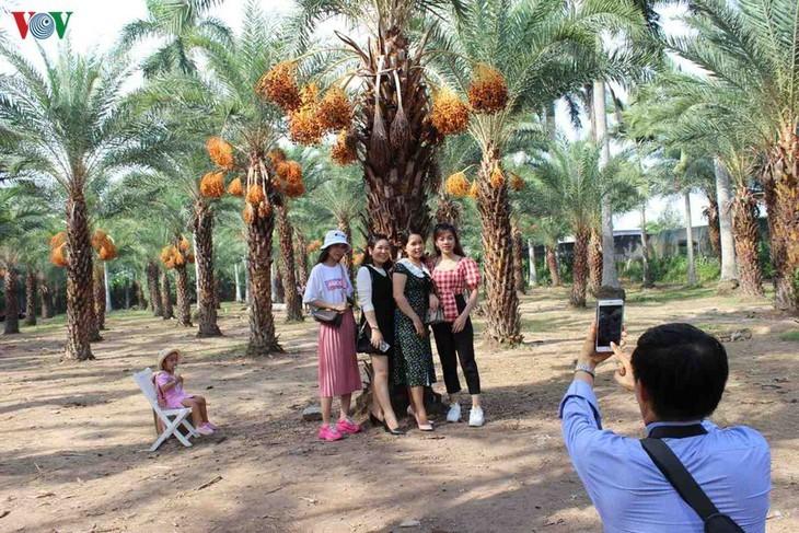 Memandangi keindahan kebun kurma paling besar di Daerah Dataran Rendah Sungai Mekong - ảnh 12