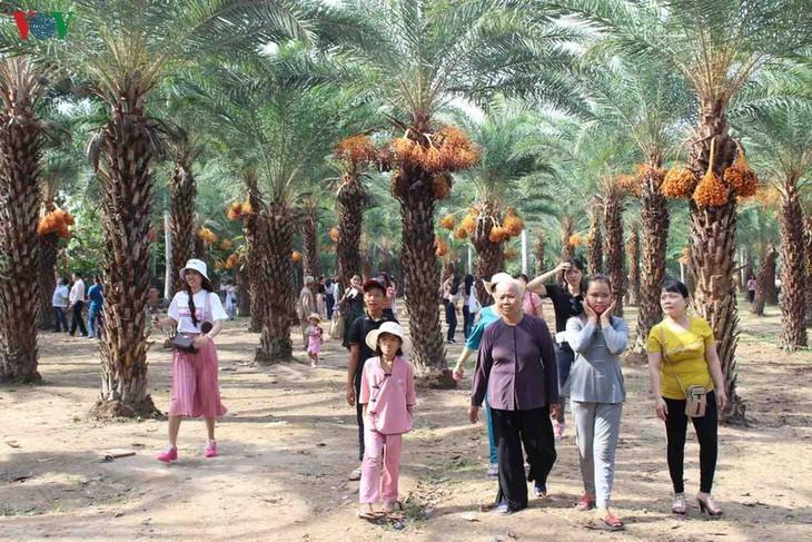 Memandangi keindahan kebun kurma paling besar di Daerah Dataran Rendah Sungai Mekong - ảnh 13