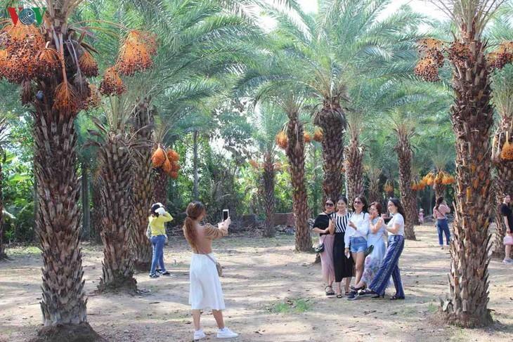 Memandangi keindahan kebun kurma paling besar di Daerah Dataran Rendah Sungai Mekong - ảnh 2