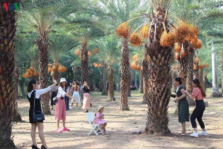 Memandangi keindahan kebun kurma paling besar di Daerah Dataran Rendah Sungai Mekong - ảnh 7