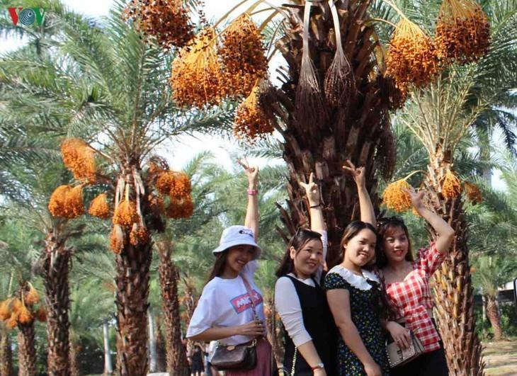 Memandangi keindahan kebun kurma paling besar di Daerah Dataran Rendah Sungai Mekong - ảnh 8