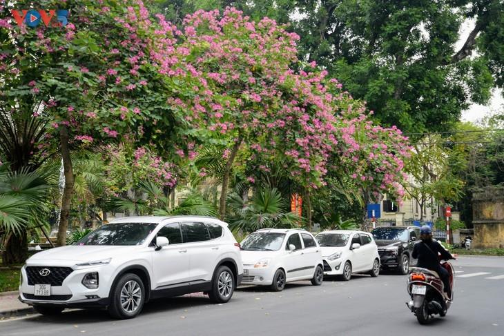 Bunga Ban Bermekaran Lebih Dini di Kota Ha Noi - ảnh 9