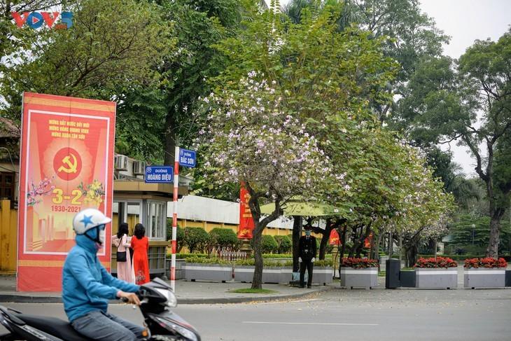 Bunga Ban Bermekaran Lebih Dini di Kota Ha Noi - ảnh 1